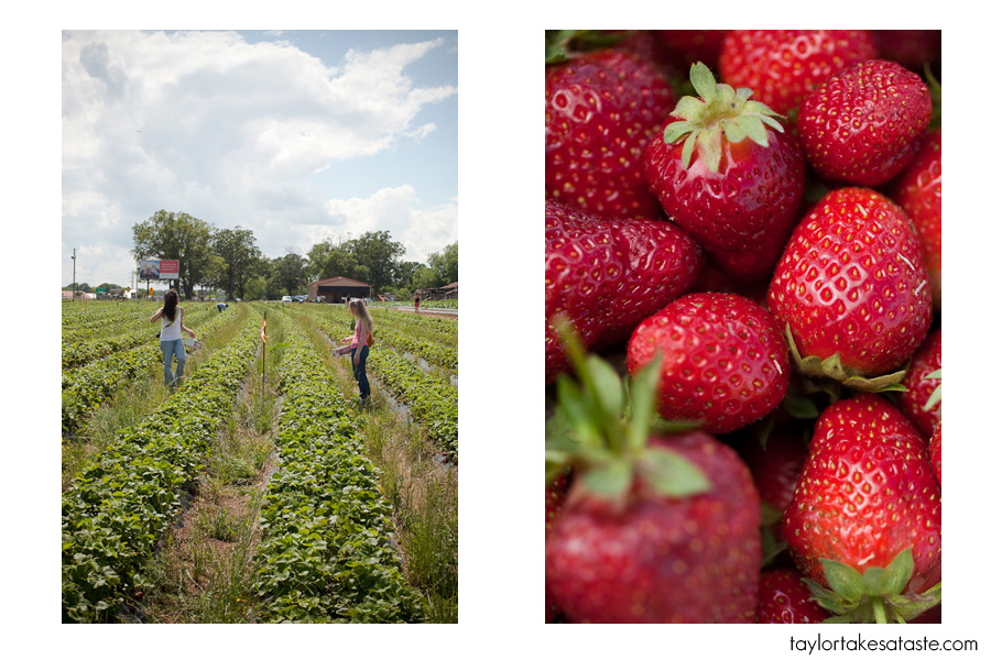National Strawberry Picking Day!