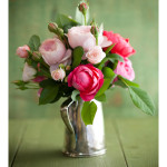 Spring_roses_on_green