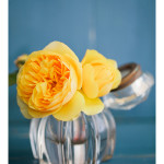 spring_roses_yellow_blue